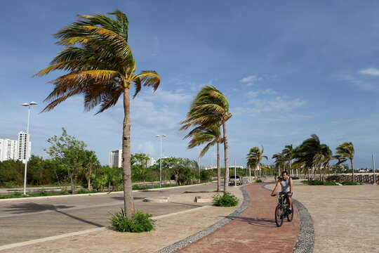 A man rides his bicycle while palm trees sway in the wind as Hurricane Zeta approaches Cancun