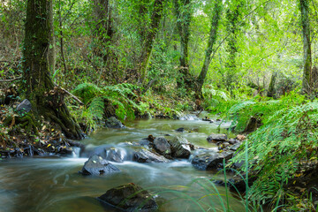 Forest river flowing between amazing multiple vegetation