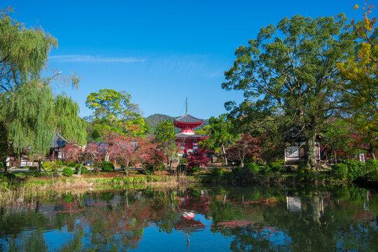 京都 大覚寺の大沢池 紅葉