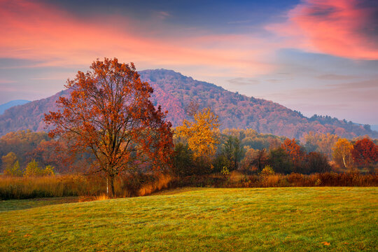 gorgeous countryside at dawn in autumn. trees in colorful foliage on the grassy field. mountains in the distance