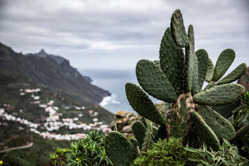 View of the ocean and the city with a cactus in the foreground, in Tenerife.