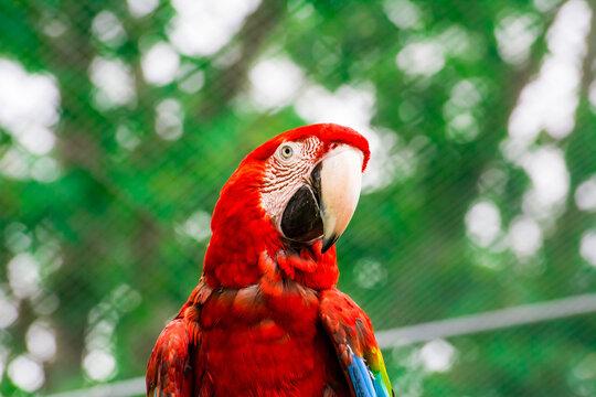 grüner vogel roter kopf
