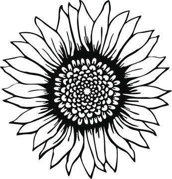 sunflower svg,sunflower clipart,sunflower cut file,sunflower vector,sunflower png,sunflower shirt,sunflower svg file,sunflower print