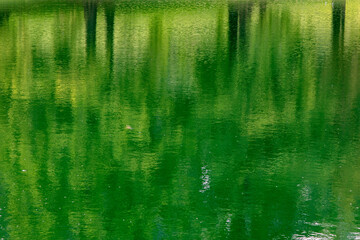 Abstract of Blurry Green Trees Reflected in a Pond