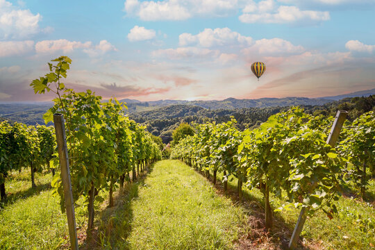 Vineyards with grapevine and winery along wine road with hot air balloon in the evening sun, Italy Tuscany Europe