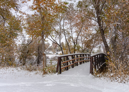 Snow Covered Footbridge Lined with Colorful Cottonwood Trees