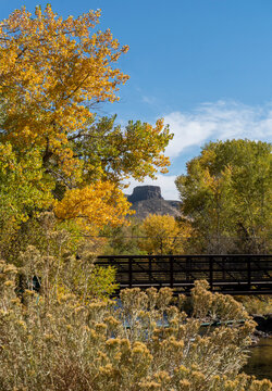 Footbridge Across Creek with Colorful Cottonwoods and Mesa in Background