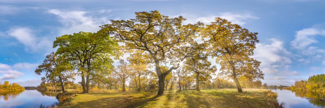 Beautiful autumn forest or park of oak grove with clumsy branches near river in gold autumn. hdri panorama with bright sun shining through the trees.