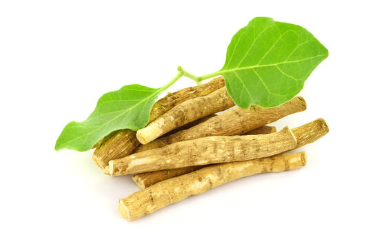 A Pile of Ashwagandha Dry Root with Fresh Green Leaves, also known as Withania Somnifera, Ashwagandha, Indian Ginseng, Poison Gooseberry, or Winter Cherry. Isolated on White Background.