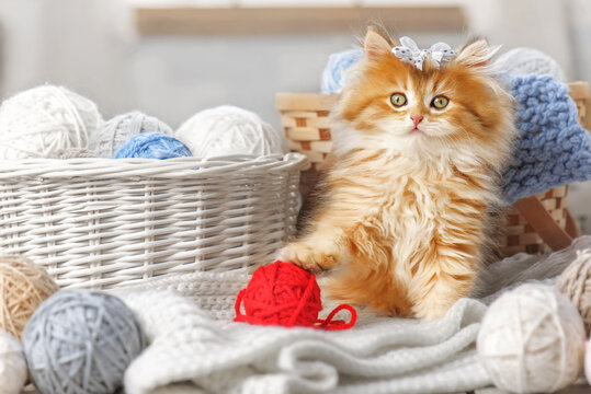 Cute kitten with a bow in a basket with balls of yarn