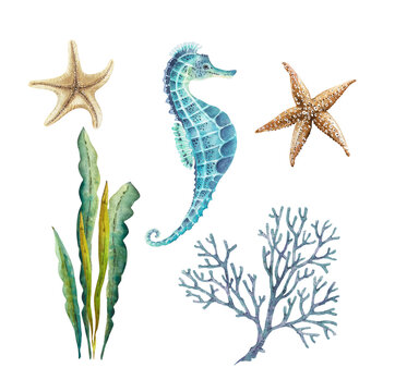 set of watercolor illustrations in a marine style on a white background, with star marine life, seahorse, seaweed hand painted