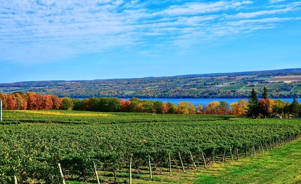 Landscape with vineyard, mountains and Seneca Lake, in the heart of Finger Lakes Wine Country, New York