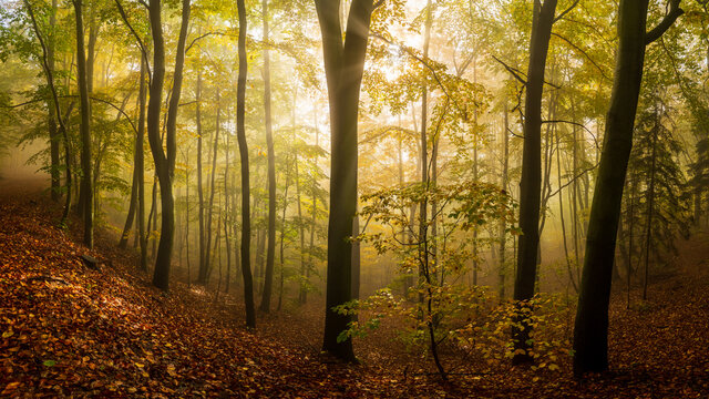 misty morning in the forest