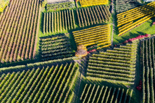 Valtellina, Italy, orchard in autumnal guise, aerial view