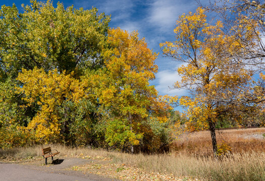 Solitary Bench Surrounded by Colorful Fall Trees and Grasses