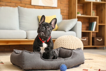Cute funny dog in pet bed at home