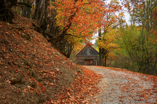 Road in autumnal forest