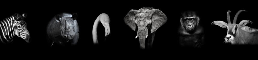 Black and white poster with animals: zebra, rhino, flamingo, elephant, gorilla