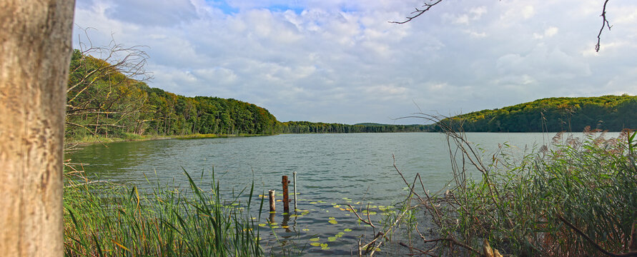 Far panoramic view at lake Wolgastsee in Usedom under cloudy sky through bushes and brushwood from lakeside