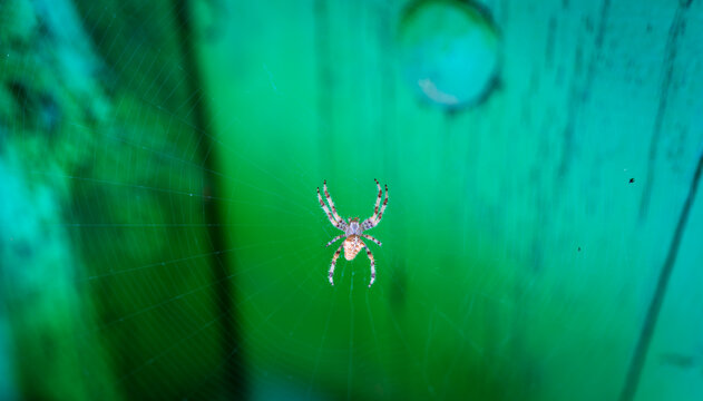 Beautiful spider in the center of the spiderweb