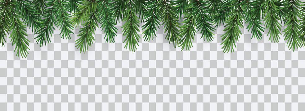 Vector decorative seamless christmas pattern or frame with green coniferous branches