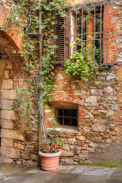 Windows, arch and wall with climbing vine on street in Castellina, Tuscany, Italy