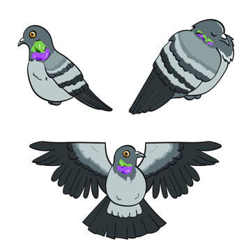 Three Cartoon Chubby Pigeons