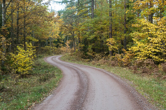 Curved gravel road in a fall colored forest