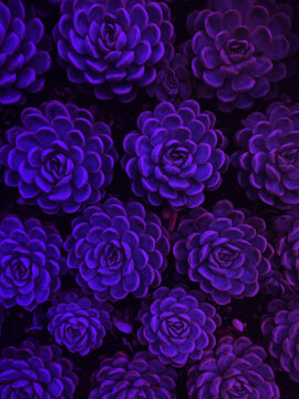 floral pattern background in neon party colors