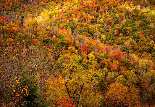 Fall colors from an overlook on the Blue Ridge Parkway near Mount Mitchell in North Carolina.