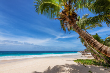 Tropical Paradise. Sandy beach with coco palm and turquoise sea. Summer vacation and tropical beach...