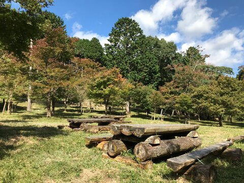 Trees and Wooden Benches in the Park