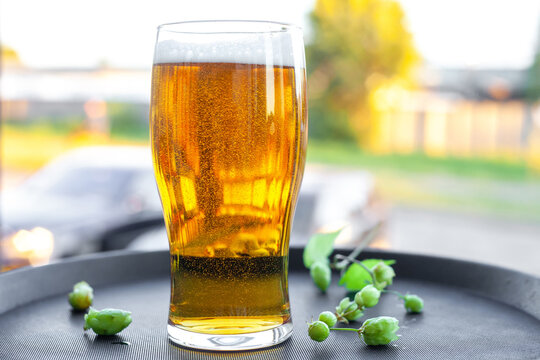 Full glass of gold beer and green hops on tray at summer