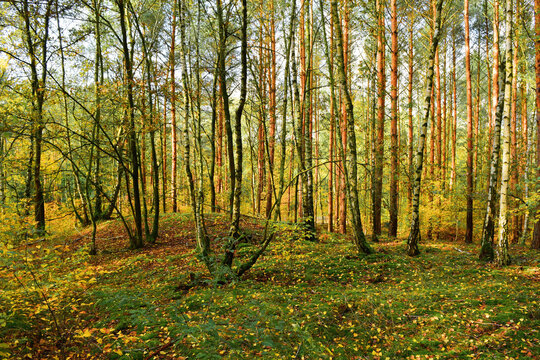 Wald und Pilze