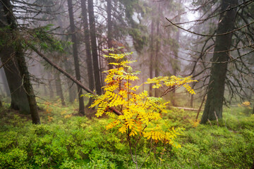 Fog in autumn forest