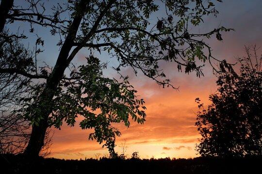 Autumn sunset on Chorleywood Common, Hertfordshire, UK