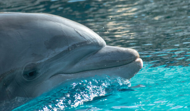 dolphin face in the water
