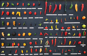 collection of hot chili peppers, different types of fruit like Green bird's eye, yellow madame Jeanette, and red cayenne