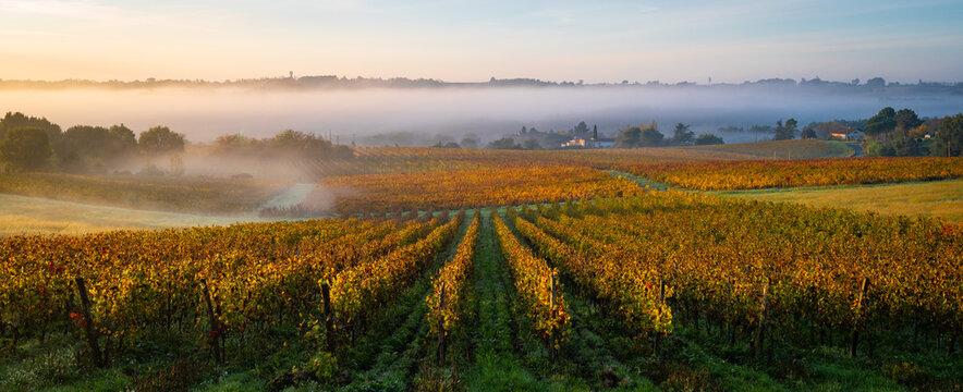 Bordeaux Vineyard at sunrise in autumn, Entre deux mers, Langoiran, Gironde, France