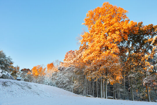 Winter landscape with fall foliage of New England at sunrise after the first snow, Boston, Massachusetts, USA.