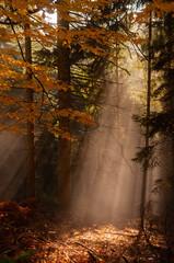 forêt automnal