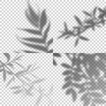 Vector Set of Transparent Shadows of Leaves and Branches. Decorative Design Elements for Collages. Creative Overlay Effect for Mockups