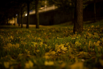 green grass and fallen leaves in a park at night in autumn in the center of prague and light from street lights in the czech republic