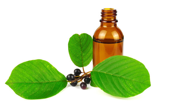 Buckthorn Tincture Extract (Frangula Alnus) with Fruit and Leaves. Also known as Alder, Glossy or Breaking Buckthorn. Isolated on White Background.