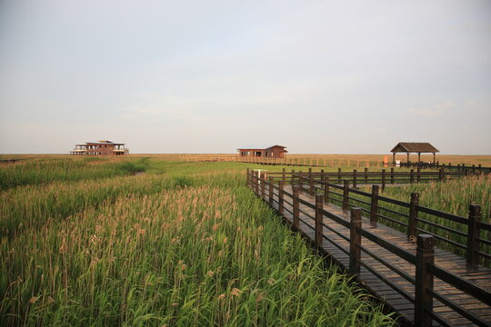 View of Chongming Dongtan Birds National Natural Reserve with reed and grass land in Chongming Island, Shanghai, China