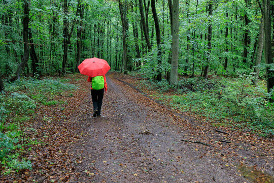 Hiking on the Moselsteig (long distance hiking trail) in the Moselle valley on a rainy day