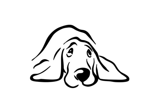 Vector black silhouette of a cute dog. Dog logo icon template