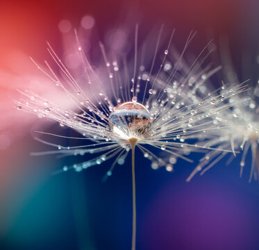Abstract blurred nature background dandelion seeds parachute. Abstract nature bokeh pattern