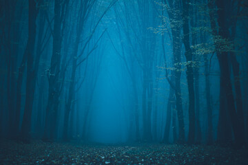 Forest in fog with mist. Fairy spooky looking woods in a misty day. Cold foggy morning in horror forest