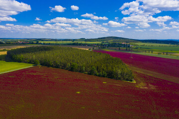 Crimson clover field and forest from above